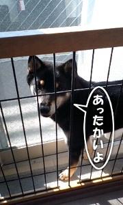 110107_sukima2.jpg