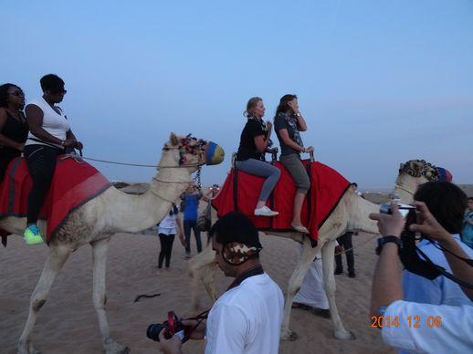 ドバイの砂漠のラクダ