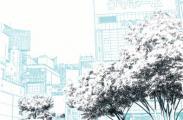 漫画背景・新宿004の樹木