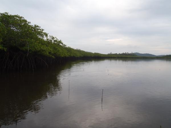 第1期植林地 視察レポート1-4