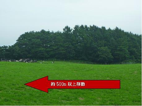 上坊牧野のお牛さん01(2010.8.3)