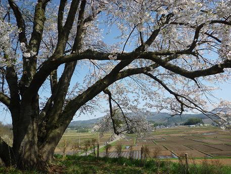 為内の一本桜遠景(2010.5.10)