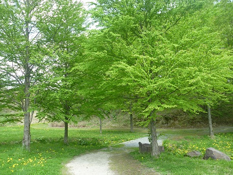 さくら公園の新緑(2010.5.22)