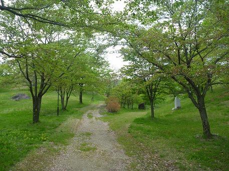 さくら公園の葉桜(2010.5.22)