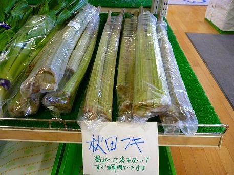 ふき?(2010.5.31)
