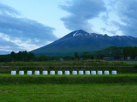 上坊途中のミステリー牧草①(2010.6.4)