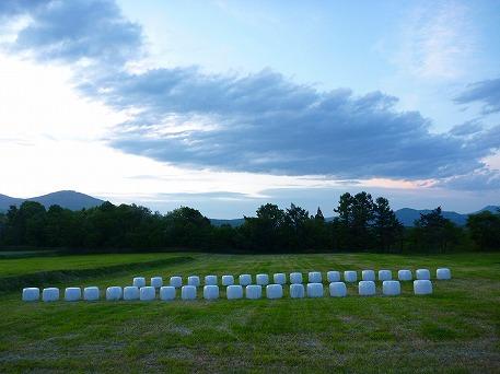 上坊途中のミステリー牧草③(2010.6.4)