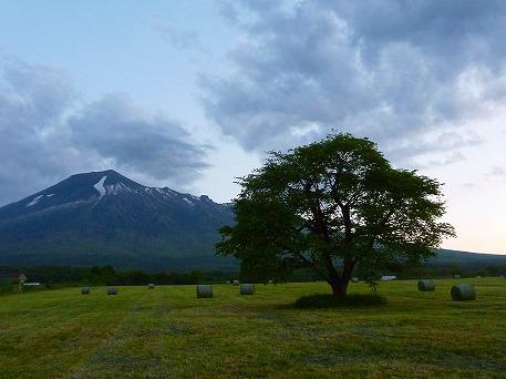上坊のミステリー牧草③(2010.6.4)