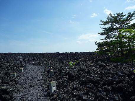 焼走り熔岩流③(2010.6.7)