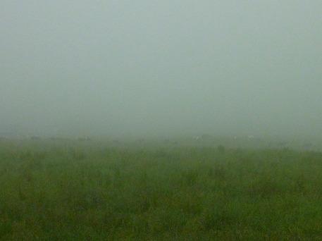 上坊牧野の牛さん(2010.6.30)