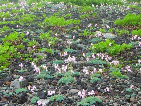 岩手山登山26(2010.7.1)