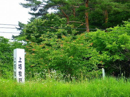 桜の木01(2010.7.7)