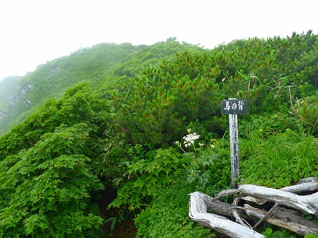 秋田駒ケ岳59(2010.7.18)
