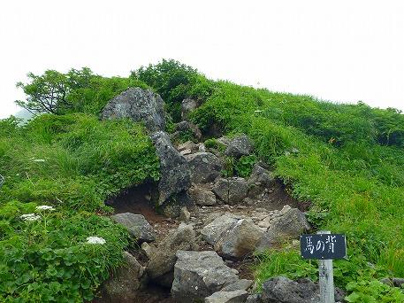 秋田駒ケ岳88(2010.7.18)