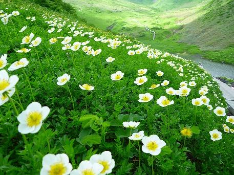 秋田駒ケ岳107(2010.7.18)