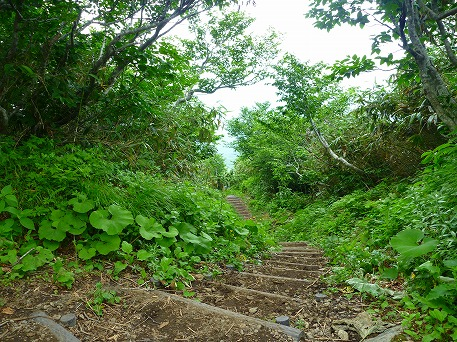 秋田駒ケ岳125(2010.7.18)