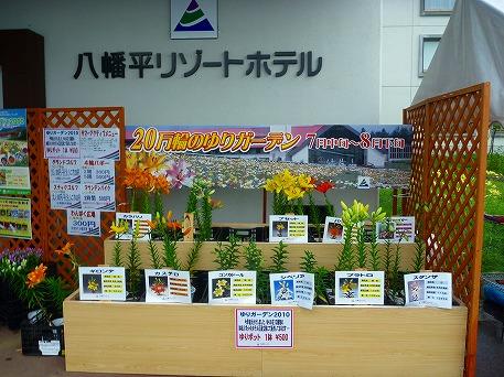 ゆりガーデン06(2010.7.31)