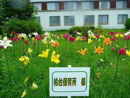 ゆりガーデン08(2010.7.31)