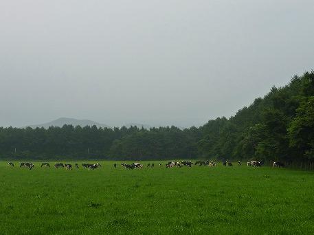 上坊牧野のお牛さん01(2010.8.2)