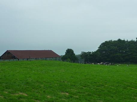 上坊牧野のお牛さん02(2010.8.3)