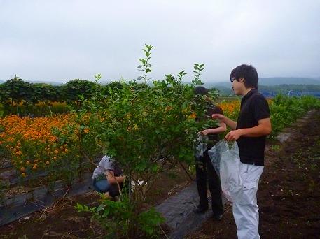 ブルーベリー収穫体験06(2010.8.11)