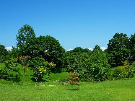 さくら公園02(2010.8.19)