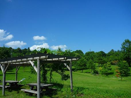 さくら公園01(2010.8.19)
