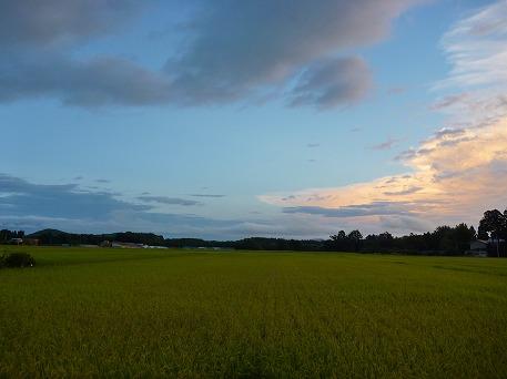 夕方の田んぼの風景03(2010.8.31)