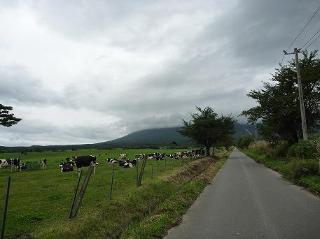 上坊牧野のお牛さん04(2010.9.25)