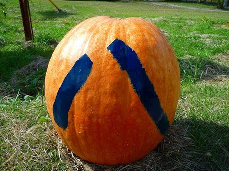 かぼちゃ06(2010.9.27)