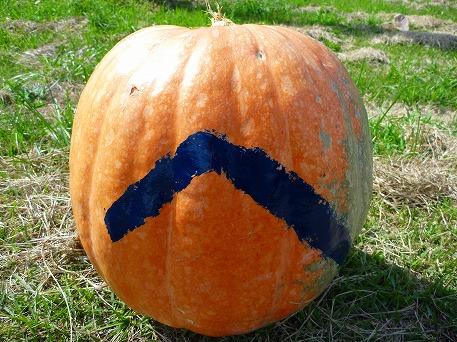 かぼちゃ09(2010.9.27)