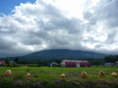 かぼちゃ12(2010.9.27)