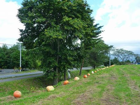 かぼちゃ13(2010.9.27)