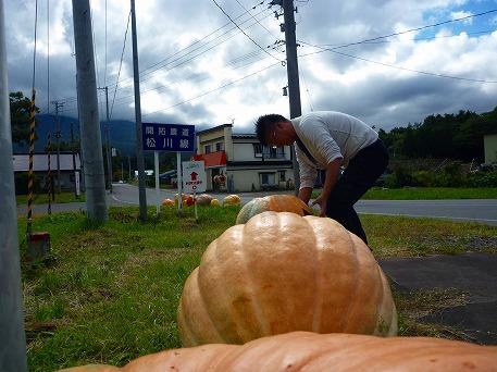 かぼちゃ17(2010.9.27)
