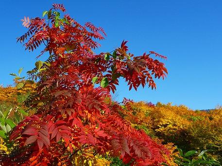 紅葉を見に行こう34(2010.10.8)
