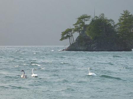 マニハチ探検隊vol.4 11(2010.11.14)十和田湖