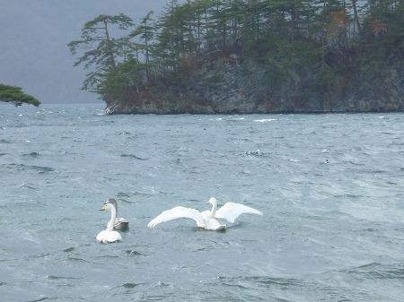 マニハチ探検隊vol.4 15(2010.11.14)十和田湖