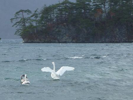 マニハチ探検隊vol.4 16(2010.11.14)十和田湖
