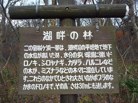 マニハチ探検隊vol.4 21(2010.11.14)十和田湖