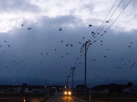 黒い電線05(2010.12.10)