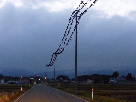黒い電線02(2010.12.10)