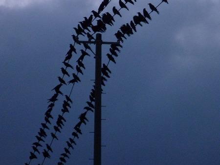 黒い電線03(2010.12.10)