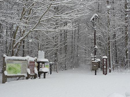 冬の焼走り熔岩流03(2010.12.27)