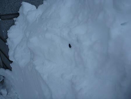 雪だるまん4号捜索04(2011.1.4)