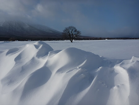 雪と一本桜(2011.1.13)