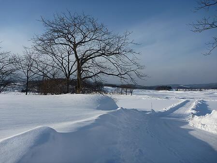 野駄の雪道02(2011.1.14)