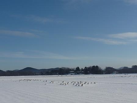 広がる雪田(2011.1.26)