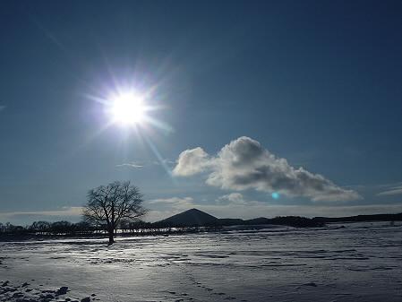 朝日の上坊牧野の一本桜01(2011.1.26)