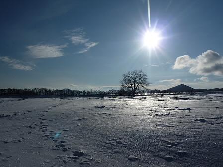 朝日の上坊牧野の一本桜02(2011.1.26)