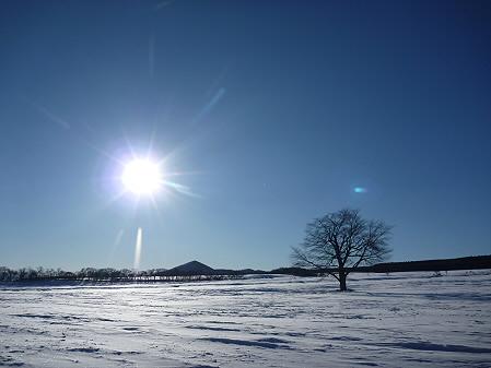 上坊牧野の一本桜03(2011.1.27)